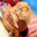 Women with Guinea Pig Ecuador
