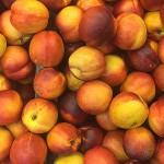 Ecuadorian Fruits South America