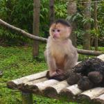 Monkey Rescue South America