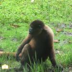 Saved Monkey Rescue Ecuador