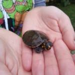 Turtles Rescue Program