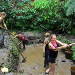 Volunteers Building Animals Pool