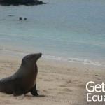 Galapagos Fauna Ecuador