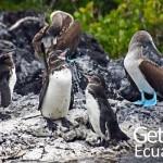 Galapagos Fauna Travel Ecuador